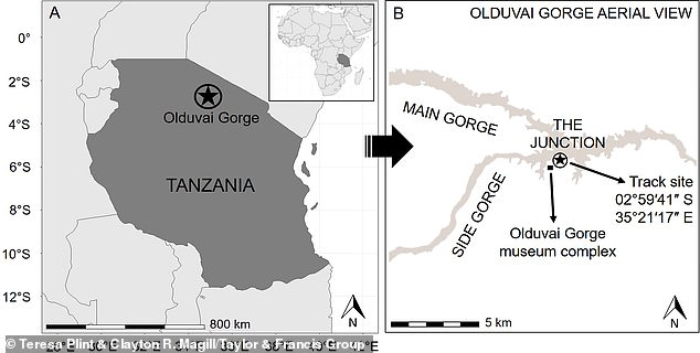 The fossils were discovered in the Olduvai Gorge in Northern Tanzania, an area that has been ripe for discovering evidence of ancient human ancestors.