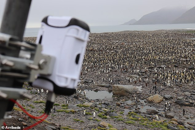 Among the uses for the Lacuna sensors is a project to monitor King Penguins (pictured) with data beamed to space and back to the researchers base