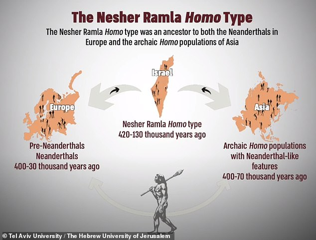 The team suspect that the Nesher Ramla people were the source from which most humans of the Middle Pleistocene developed — including 'European' Neanderthals