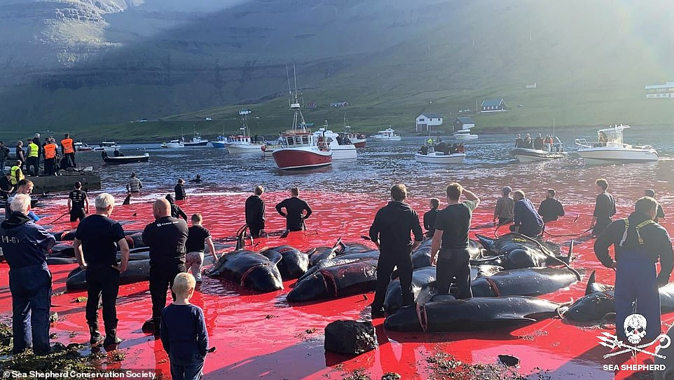 Hunters on the shore atHvannasund in the Faroe Islands where 123 pilot whales were slaughtered on Sunday at around noon