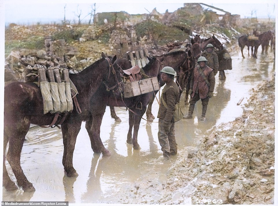 Pack mules loaded with supplies are walked through the muddy track towards the front in October 1916.The Battle of the Somme - the first day of which caused the biggest single loss of life in British military history - became synonymous with the sucking mud in which troops fought, and often died