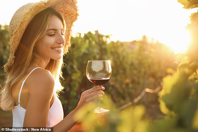 Slowing down the grape ripening process can improve the quality of the berry and result in increased levels of chemicals linked to more pleasing notes, study shows (stock image)