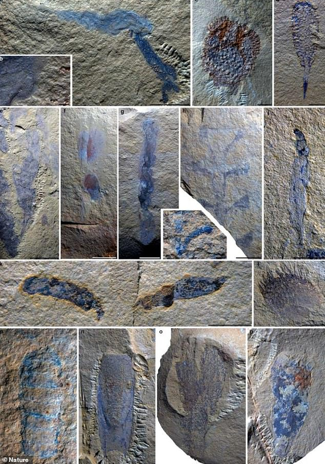 Paleontologists in Kunming, China, believe they've unearthed a Cambrian-era 'paleonursery,' featuring more than 2,800 fossilized specimens, half of which were juvenile