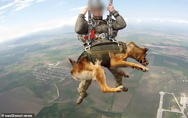 Tests have so far proved that the service animals can be dropped by parachute from as high as 13,000 feet