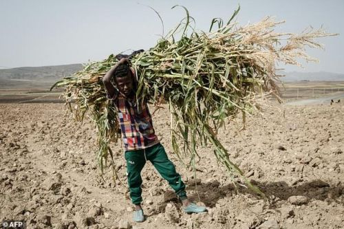The UN has warned that roughly 350,000 people in Tigray are on the brink of famine -- the US puts figure as high as 900,000