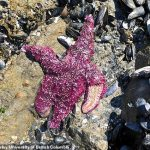 Heat Dome killed 1 BILLION sea creatures in the Pacific Northwest with temperatures at 104F 💥👩💥
