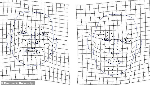 AI at work: Visualisations of the facial shapes that the computer algorithm identified as looking less (left) and more (right) open to casual connections