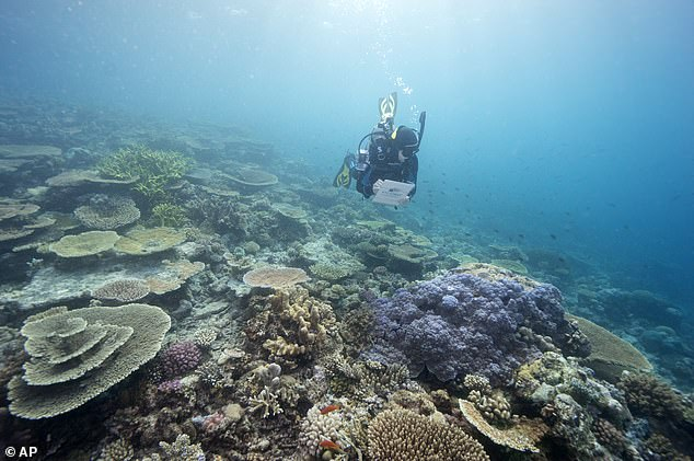 The committee, which is organized by the United Nations Educational, Scientific and Cultural Organization (UNESCO), met today to discuss the matter, as more than 60 percent of the corals being impacted by bleaching that is linked to climate change