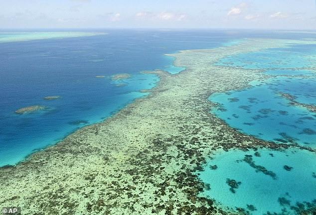 The committee is instead asking for report by February 2022 highlight the Great Barrier Reef's state of conservation and measures that will be taken to ensure its survival