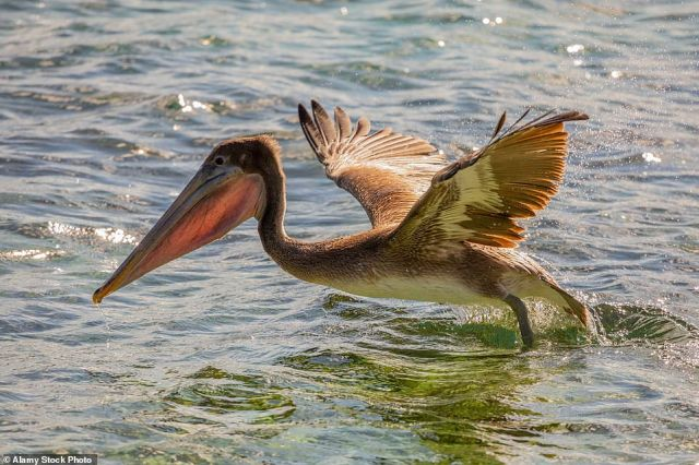 The Daily Mail's Tom Chesshyre recalls the waves lapping and watching pelicans swooping