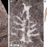 310-million-year-old horseshoe crab brain is very similar to modern-day creature's 💥👩💥