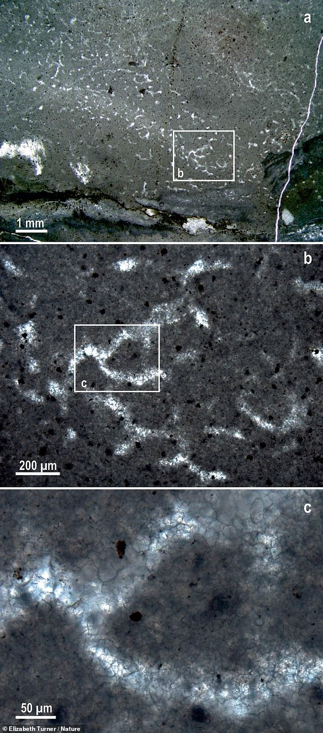 Each tube structure (pictured here under three levels of magnification) both contained and was surrounded by crystals of the mineral calcite, alongside structures previously identified in calcium carbonate rocks that are thought to be created by the decay of keratose sponges