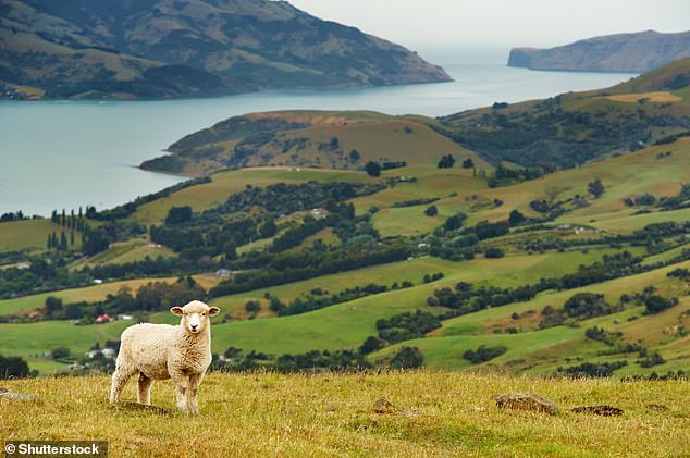 Worried about acataclysmic societal collapse? Move to New Zealand. Experts found it's the best location for survival in the face of a 'major global shock'. Pictured,Banks Peninsula on theSouth Island of New Zealand