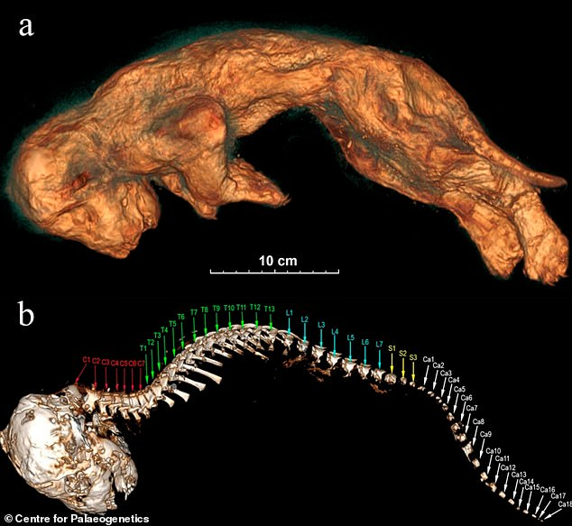 The tomographic images of Sparta's body from the left side: (a) skin; (b) skull and spine