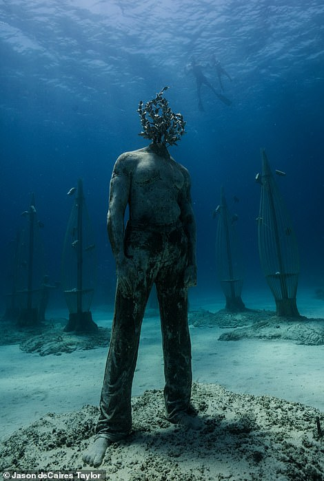 Musan will become an evolving and growing underwater forest