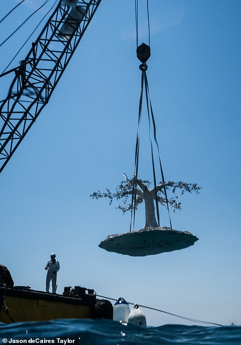 A crane, positioned200 metres from the coast, helped to lower the sculptures to the seabed