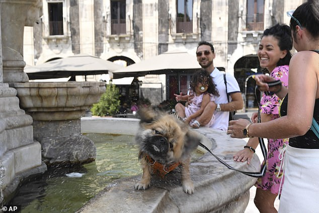 People cools their pets down in a fountain in Catania, Sicily on Wednesday as temperatures hit 45C