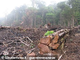 Logging in Brazil has tilted the Amazon from a carbon 'sink' to a carbon emitter