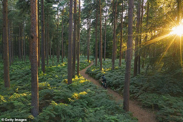 Since clouds tend to form more frequently over forested areas, 'planting trees over large areas is advantageous and should be done for climate purposes,' says Amilcare Porporato, an environmental engineer at Princeton's High Meadows Environmental Institute