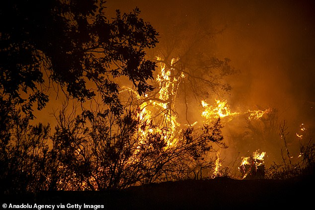 After a record fire season in 2020, 2021 may be even worse. Experts fear the fires can once again cause COVID-19 surges. Pictured: A fire erupts in Jendouba, Tunisia, as part of a wave of fires that have struck North Africa