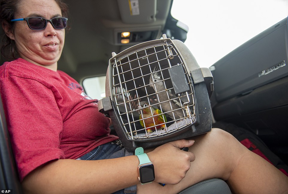 Inundated with surrendered pets, Louisiana's Society for the Prevention of Cruelty to Animals is also at full capacity, and will similarly transition to 'post-storm operations'