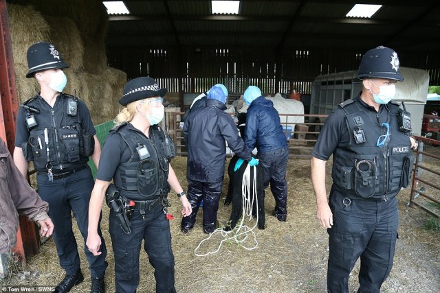 Police have turned up to the Gloucestershire farm which is home to Geronimo the alpaca just days before the destruction warrant ends after the animal tested positive twice for bovine tuberculosis