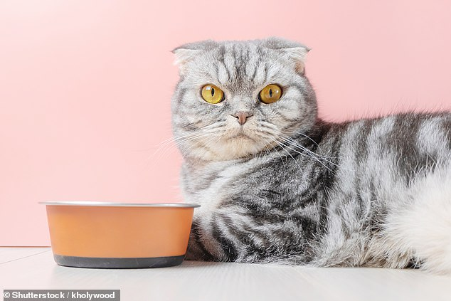 Cats are falling ill with 'life-threatening' levels of stress due to their owners spending more time at home, damaging the felines' daily routine, vats have warned. Stock image