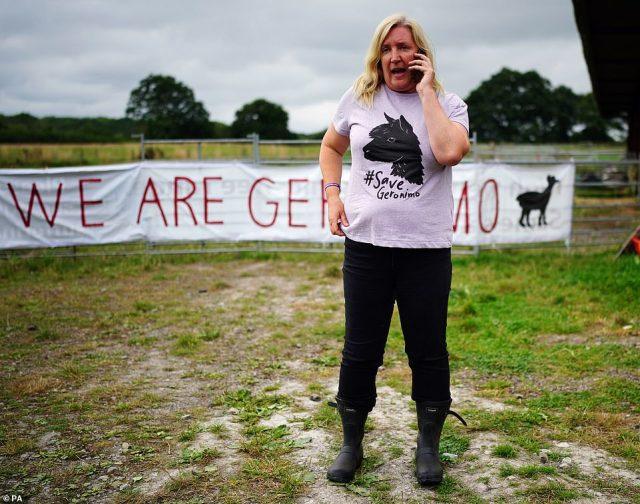 Geronimo's owner Helen Macdonald speaks on her phone after her beloved alpaca was removed on August 31