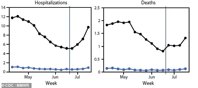 The effectiveness against hospitalizations barely fell from 92% to 90% effective and barely fell against from 94% to 91%.Pictured: Number of hospitalizations per 100,000 among unvaccinated people (black line) versus vaccinated people (blue line) on left; deaths per 100,000 among unvaccinated versus vaccinated on right