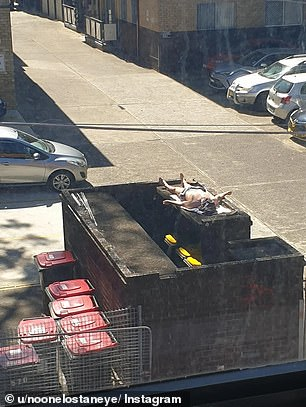 A man has been captured sunbaking in an unusual place on Sydney's scorching weekend