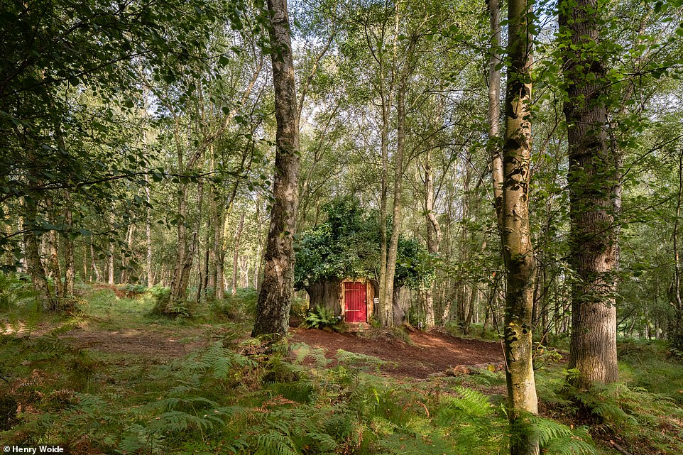 During their East Sussex stay, guests can enjoy a guided tour of the surrounding Ashdown Forest