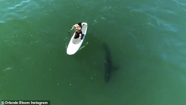 Amazing:Orlando Bloom proved to be fearless while paddleboarding in Malibu with a great white shark in an awe-inspiring video shared to Instagram on Tuesday