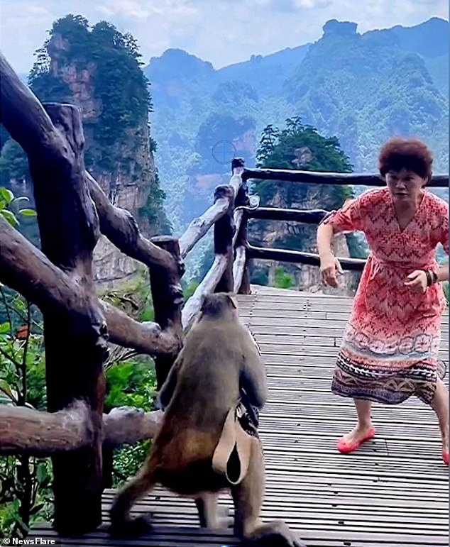 The woman, who was dancing, reacts immediately as the monkey grabs her handbag and prepares to escape