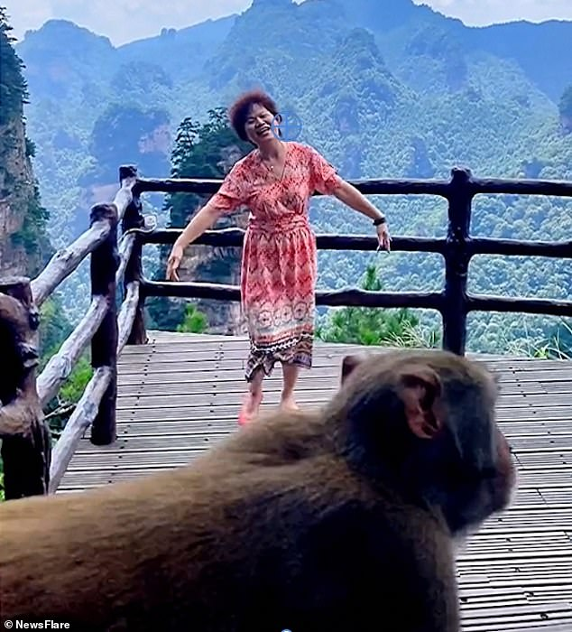 This is the moment a monkey pops in front of a camera while trying to steal a woman's handbag
