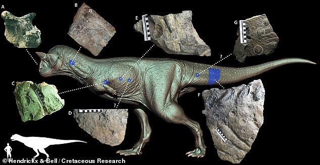 Scientists have painted a new picture of Carnotaurus — the 'carnivorous bull' dinosaur — with a complex coat of scale, studs, thorns, bumps and wrinkles, as depicted