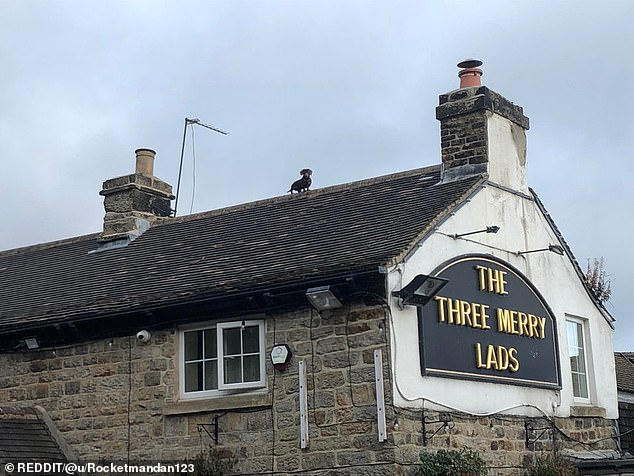 An unnamed walker posted to a Reddit forum after potting a dachshund on top of The Three Merry Lads pub in Sheffield