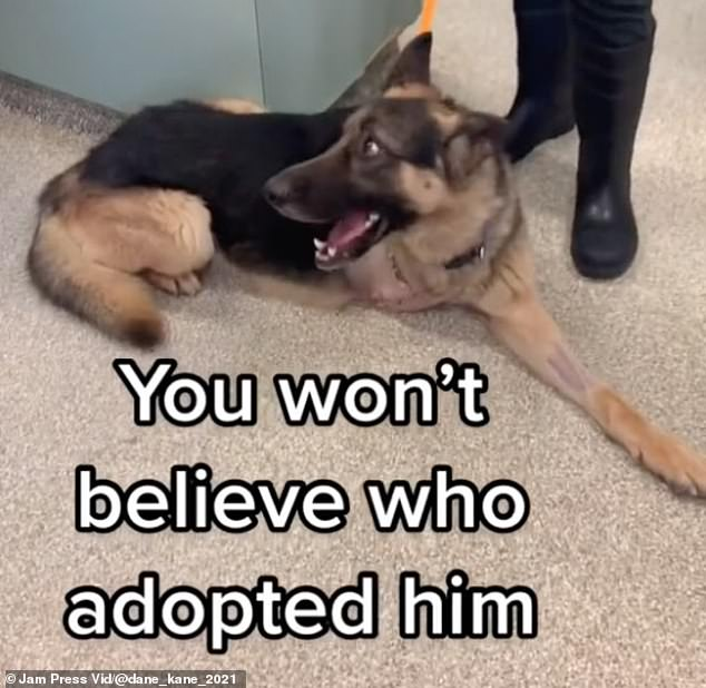 Surprise! Footage filmed by the animal shelter built up to the big reveal of Kane's adopter