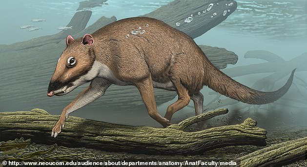 The largest animal on Earth swims in the depths of the oceans, but 50 million years ago whales walked across the surface on four legs.  A professor at Northeast Ohio Medical University has revealed that the giant creatures are descendants of an ancient 'little deer' known as Indohyus
