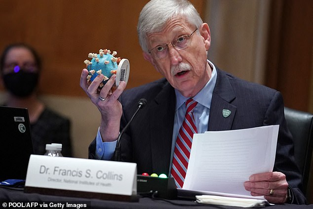 """NIH Director Dr Francis Collins said the long-term COVID research funding is a big step forward for patients who have """"totally impacted their lives"""" with the virus.  Pictured: Collins holds a coronavirus model as she testifies on Capitol Hill in May 2021"""