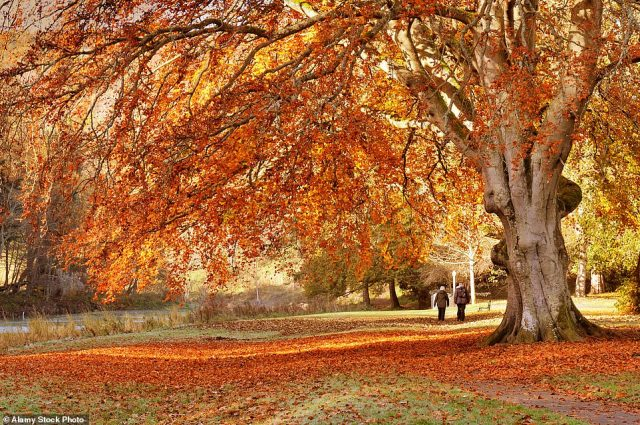 Red stars: Dawyck Botanic Garden and Arboretum, on the Scottish Borders, has trees planted in the 17th Century