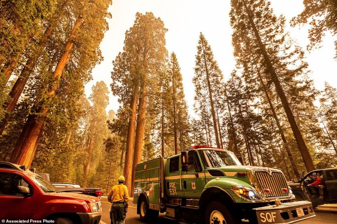 A fire engine drives past sequoia trees in Lost Grove as the KNP Complex Fire burns nearby
