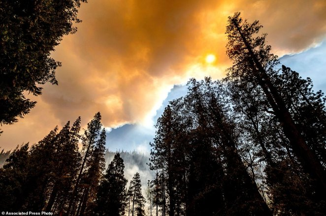 Smoke rises above trees as the Windy Fire burns in Sequoia National Forest, California