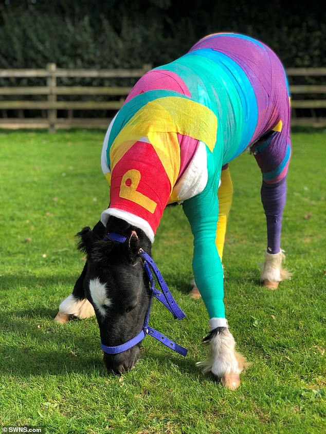 Vets caring for Phoenix the foal have dressed him in colourful bandages, adorned with rainbow, ladybird and polka dot patterns as he recovers from full-body burns