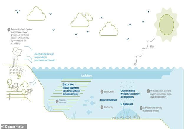 Nutrient pollution from land-based activities, such as farming and industry, degrades water quality and increases conditions conducive to eutrophication.  Eutrophication is where a body of water becomes enriched with minerals and nutrients, sometimes turning it green.  However, ocean surface inorganic nutrient depletion can be linked to oligotrophication, which occurs when water is extremely low in nutrients and therefore cannot support the growth of aquatic plants.