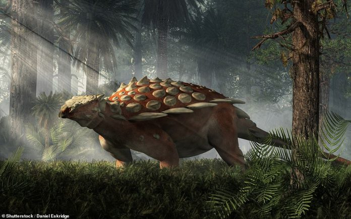 It is not clear exactly what Specomelus afer would have looked like, but researchers say it would have been similar to other ankylosaurs (artist's impression pictured)