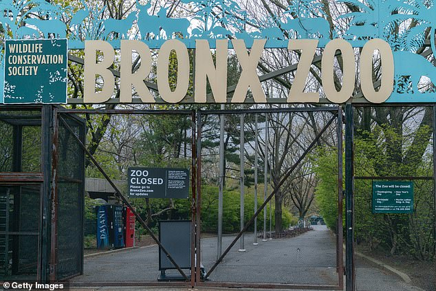 A representative at the Bronx Zoo said he was unaware of the clip and didn't comment when reached out to by DailyMail.com