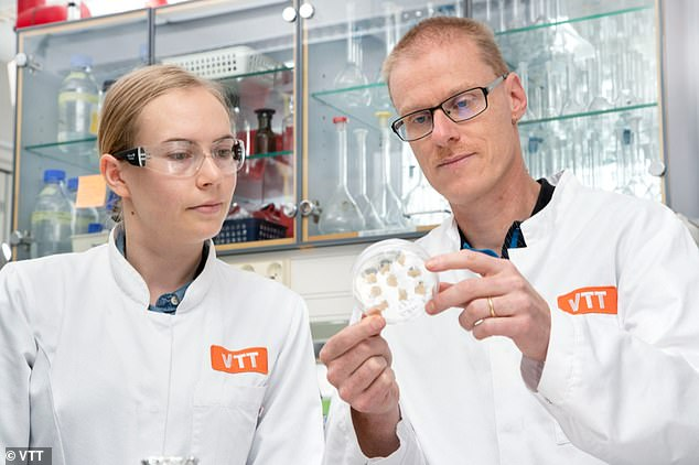 Elviira Kärkkäinen and Heiko Rischer look at coffee biomass grown in their lab.  Regulatory approval and market introduction are a hurdle before lab-grown coffee becomes a commercial product