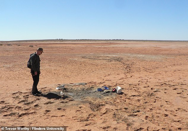 While Lake Pimpa is today a bone-dry desert, 25 million years it was a vast, shallow body of water surrounded by lush green forests.  Image: Flinders University paleontologist Warren Handley at the excavation site near Pimpa Lake, South Australia