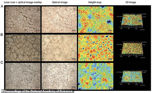 Images from the research paper, provided via high-resolution scanning laser microscopy, show cassowary eggshell internal surfaces