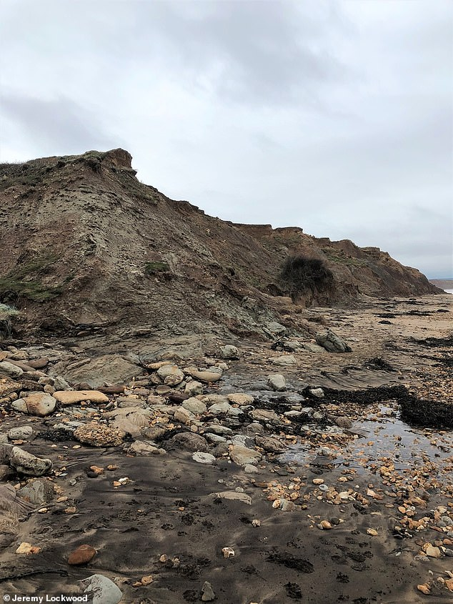 More than 50 bones were discovered over a period of several years from rocks that formed part of the Wessex Formation, laid 125 million years ago